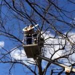 orezivanje-drveca
